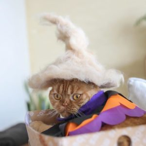 Kucing Cosplayer