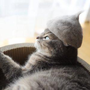 Kucing Lagi Merenung