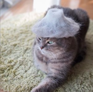Kucing Merenung