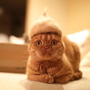 Topi Bulu Kucing