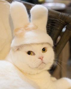 Topi Kucing Kelinci